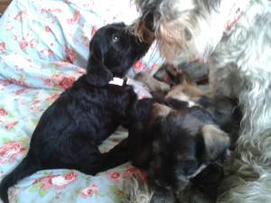 puppies and mum