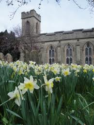 church and daffodils