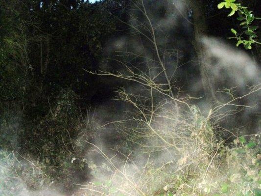 white mist