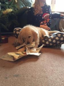 Poppy's First Christmas
